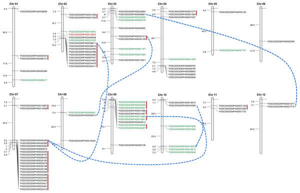 Distribution of LecRLKs genes on potato (Solanum tuberosum) chromosomes.
