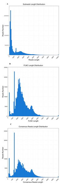 Read length distribution of SMRT sequencing.