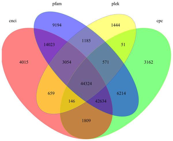 Candidate lncRNAs identified using CNCI, Pfam, Plek, and CPC.