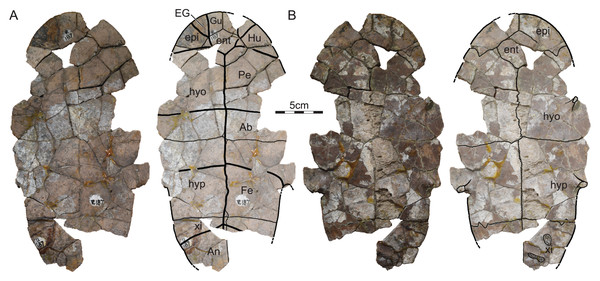 ISI R187, Kurmademydini indet., Maharashtra, India, Lameta Formation, Late Cretaceous (Maastrichtian).