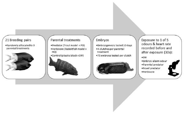 Flow diagram summarising the experimental methdology.