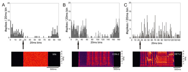 Inhibition and excitation by different stimuli in the same MLd unit of a cross-fostered zebra finch (ZF-CF).