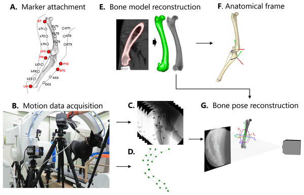 Procedures for motion data acquisition and reconstruction.