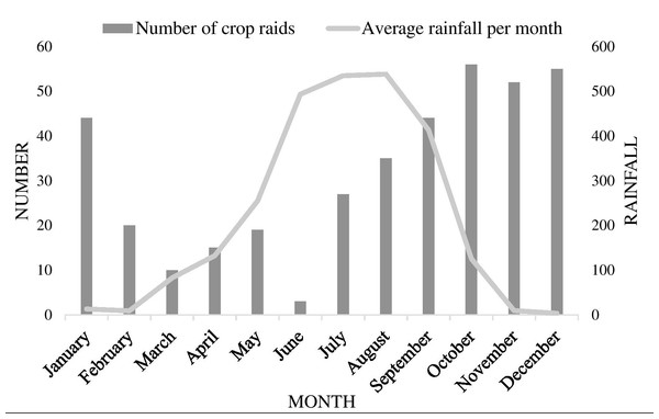 Graph displaying relationship between crop raiding frequencies by elephants and monthly rainfall in North Bengal.