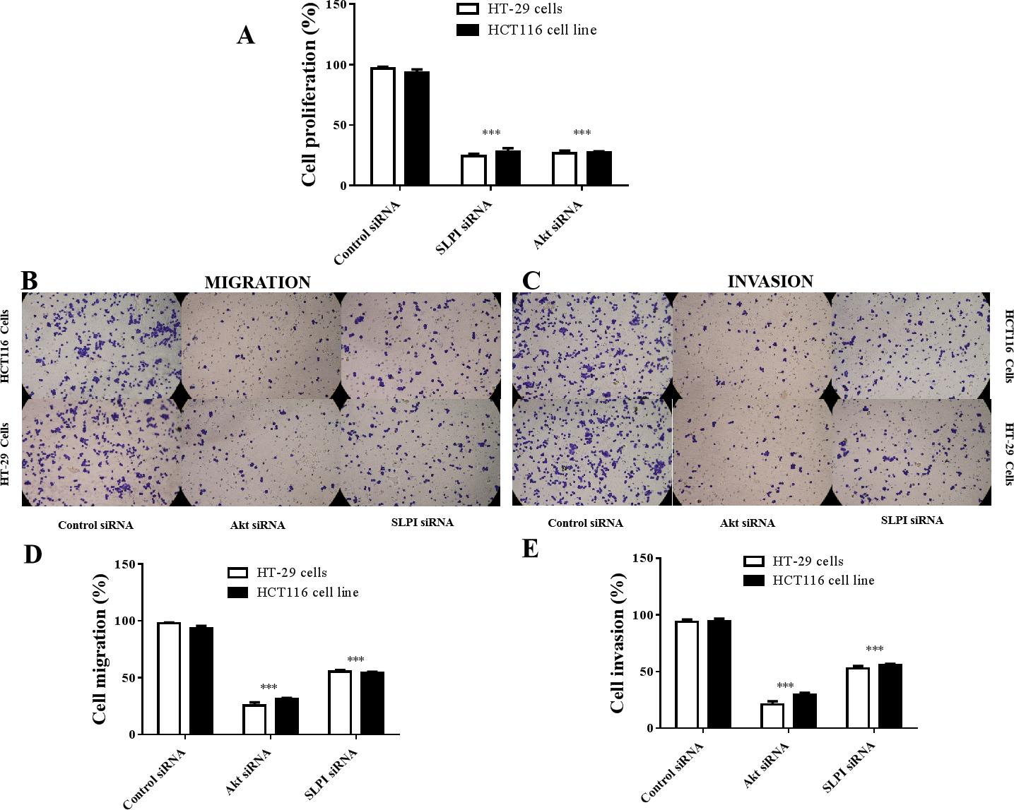 Targeting Secretory Leukocyte Protease Inhibitor Slpi Inhibits Colorectal Cancer Cell Growth Migration And Invasion Via Downregulation Of Akt Peerj