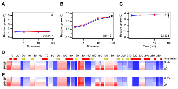 HDX analysis of Savinase.