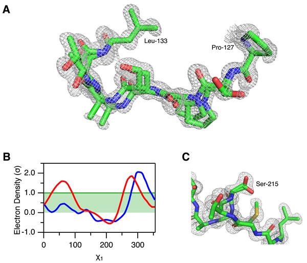 Alternative conformations in the electron density of Savinase.