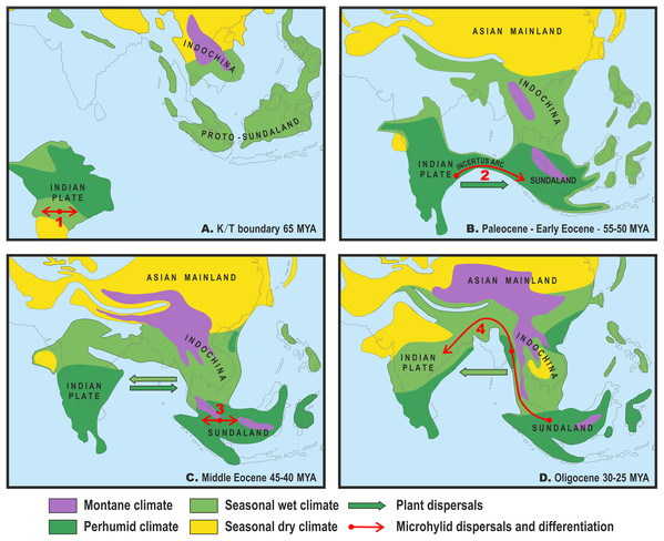 Paleogeography and climate of South and Southeast Asia, 60–25 Ma.