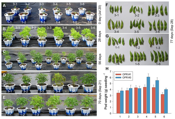 Biofertilizer assays for soybean plants.