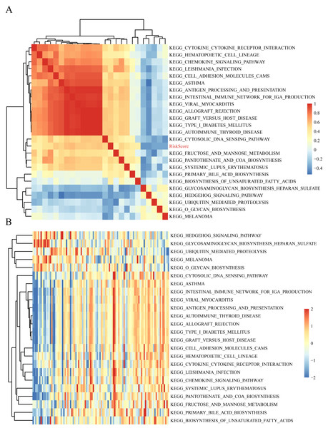 The correlations of enriched signaling pathways with risk score.