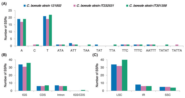 Analyses of simple sequence repeats (SSRs) in C. boreale chloroplast genomes.