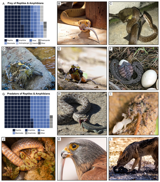 Diversity of predator–prey interactions detected using Facebook.