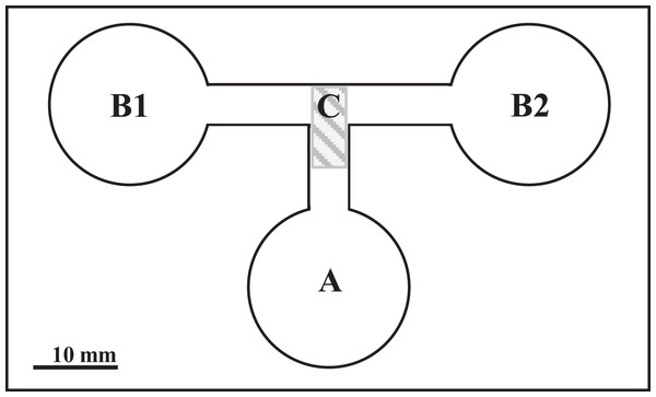 The choice-chamber for evaluation of bird schistosome miracidial chemotactic swimming behavior (channel depth: 3 mm).