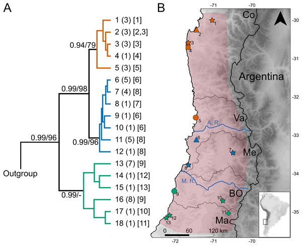 Geographic variation of the mitochondrial diversity of Abrothrix longipilis.