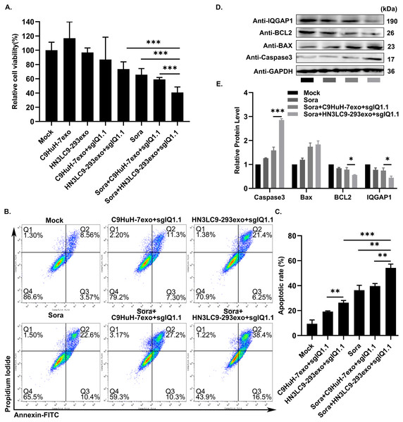 A combination therapy of engineered exosomes/CRISPR/Cas9-mediated IQGAP1 inhibition and sorafenib treatment.
