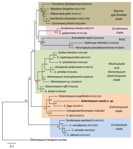 Maximum likelihood topology of the main clades of marine myxosporeans.