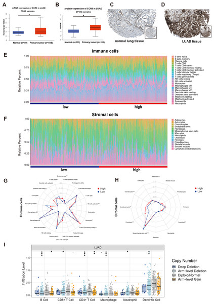 mRNA and protein expressions, immune and stromal status of CCR6 in LUAD.