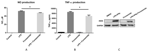 Furosemide decreases the production of NO and TNF-α.