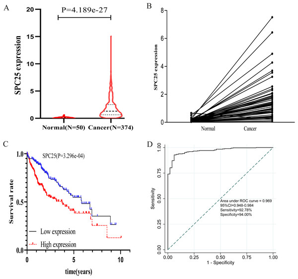 The expression levels and diagnostic and prognostic values of SPC25 in hepatocellular carcinoma.