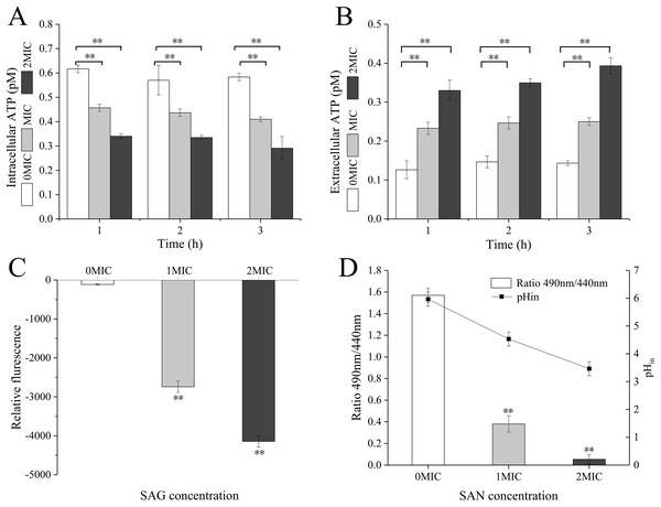 SAG treatment led to a decrease in the intracellular ATP concentrations, pH and membrane potential of P. rettgeri.