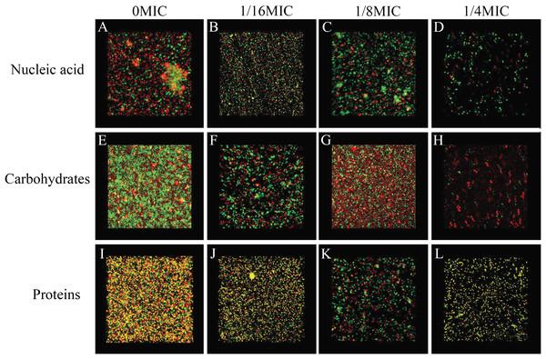 SAG could change the biofilm matrix composition of P. rettgeri cells.