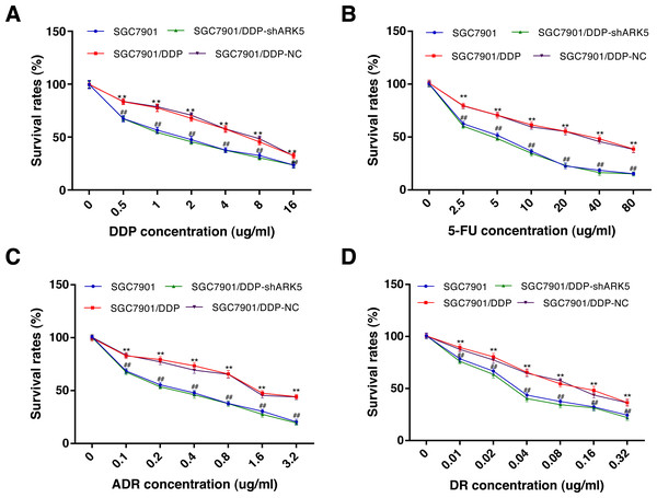 Effects of ARK5 gene Silencing on the survival rates in multidrug-resistant gastric cancer cells.