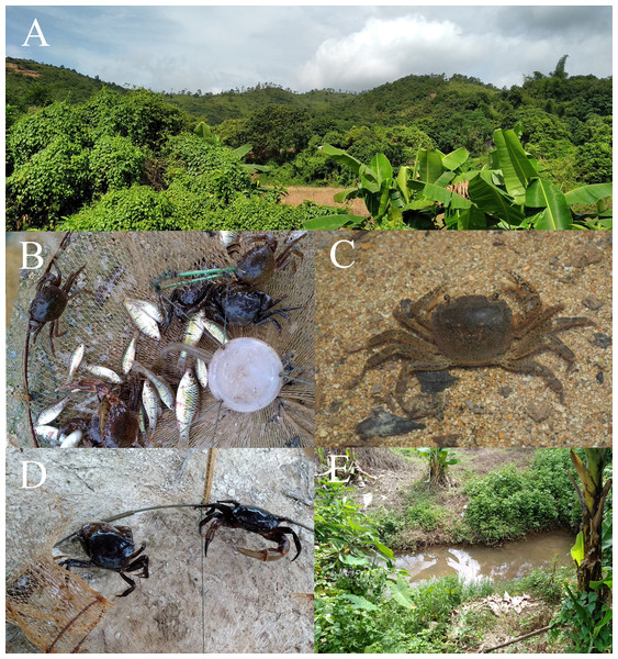 Habitat Environment of Heterochelamon huidongense n. sp.