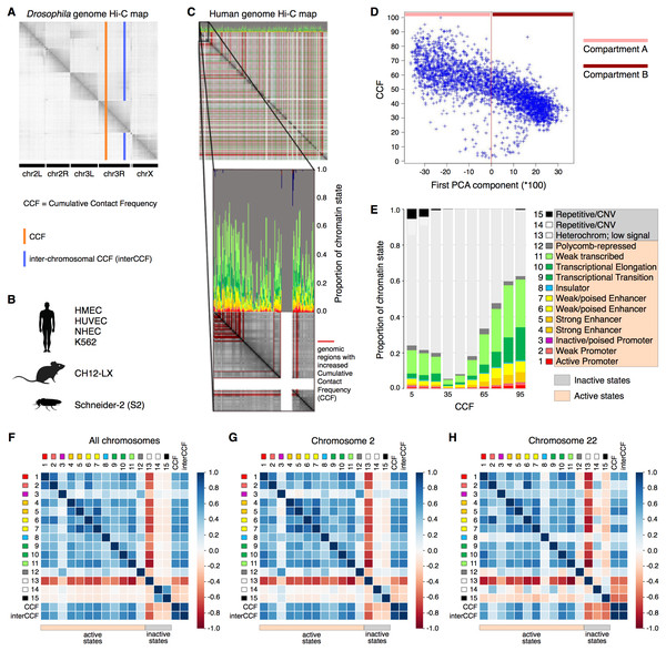 Cumulative contact frequency (CCF) is positively correlated with active transcription.