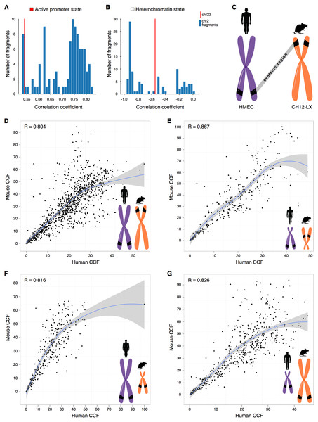 CCF is a position-independent inherent property of chromatin regions conserved in syntenic transitions.