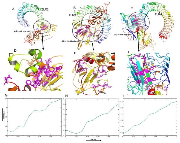 Molecular docking and dynamics of CoV-RMEN vaccine with immune receptors (TLR2, TLR3 and TLR4).
