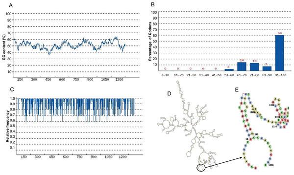Codon optimization and mRNA structure of CoV-RMEN gene for expression in E. coli.