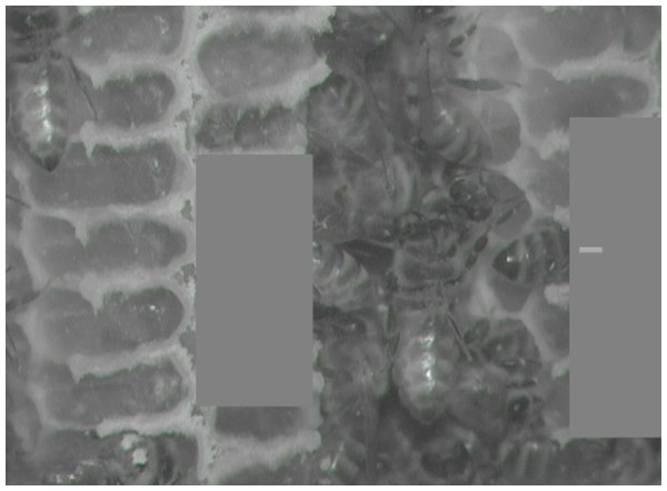 Still image from infrared test video.