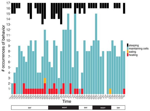 Number of observations spent sleeping, maintaining cells, eating, or heating inside cells across time.