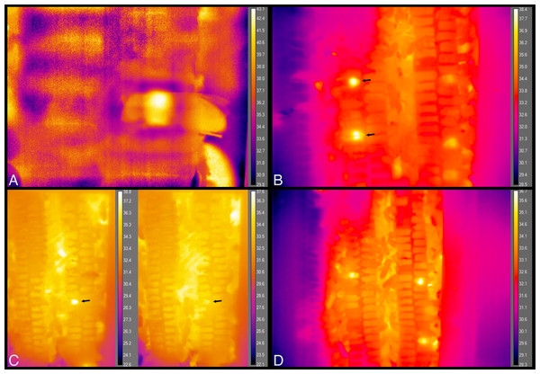 Still images from thermal imaging videos.
