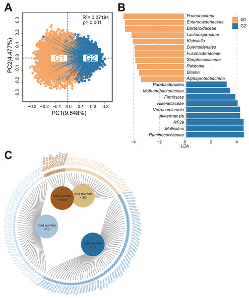 Bacterial community structure analysis and sequential operational taxonomic units of Christensenellaceae.