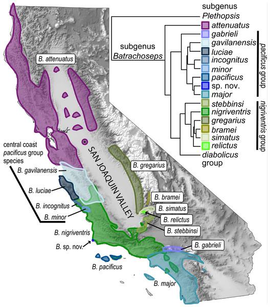 Overview of the genus Batrachoseps.