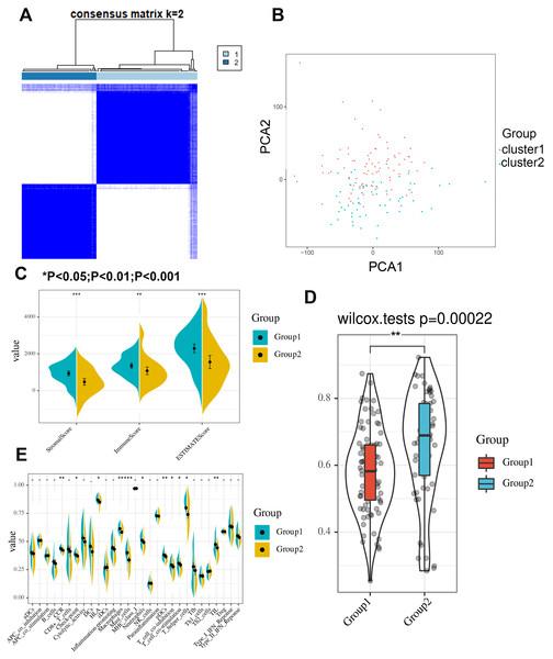 Consensus clustering identifies two subgroups with distinct immune scores, stromal scores, tumor purities and immune signatures.