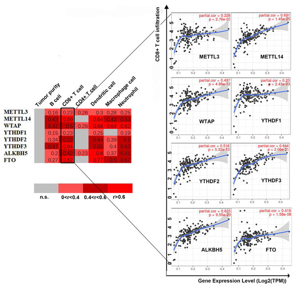 Correlation between infiltrating immune cells and the expression level of m6A-related genes.