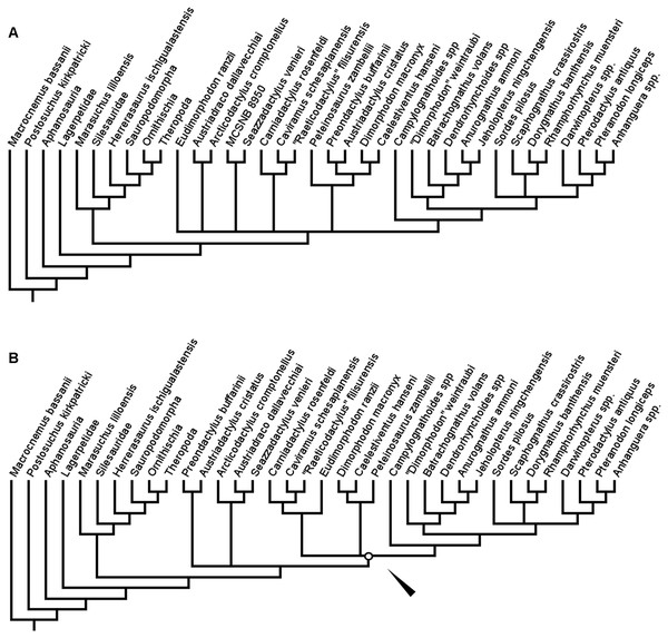 Strict consensus (A) and reduced strict consensus (B) trees produced when following the analysis protocol of Ezcurra (2014) and using equal weights parsimony.