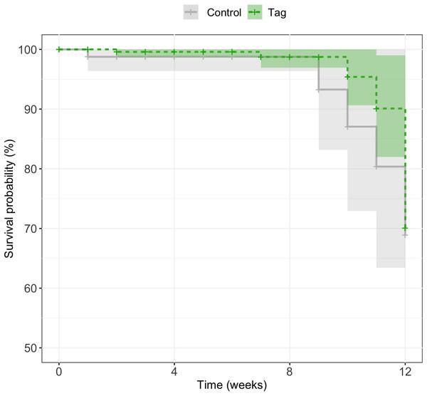 Kaplan–Meier survival curves of experimental tadpoles across larval development.