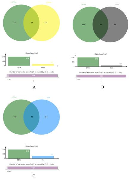 DEGs and module gene Venn diagram.