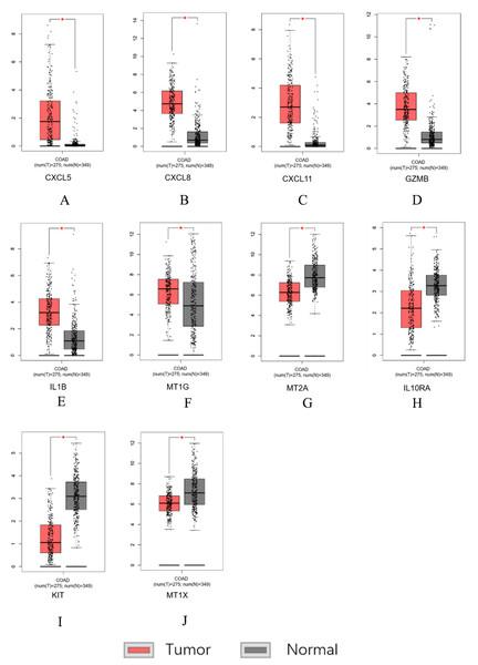 Hub genes screened by TCGA-COAD data validation.