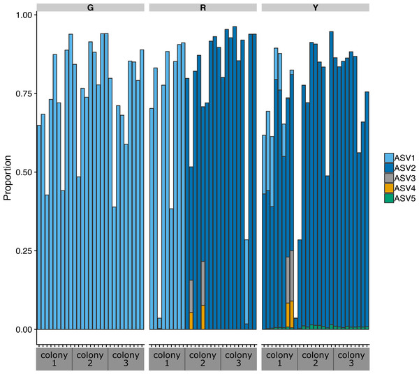 Proportion of amplicon sequence variants classified as the Rickettsiales genus MD3-55 relative to all ASVs in the communities in colonies of green (G), red (R), and yellow (Y) coral genotypes of nursery-reared Acropora cervicornis.