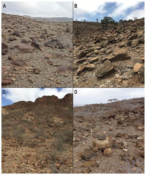 Somali Sengi habitat photographs from four localities in Djibouti.