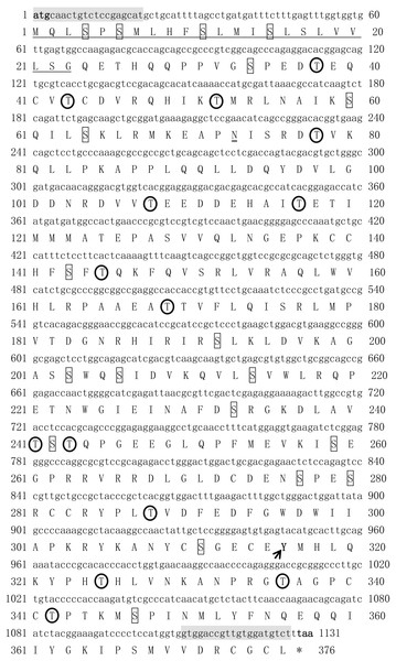 The cDNA and deduced amino acid sequence of Tbmstn1 from Takifugu bimaculatus.