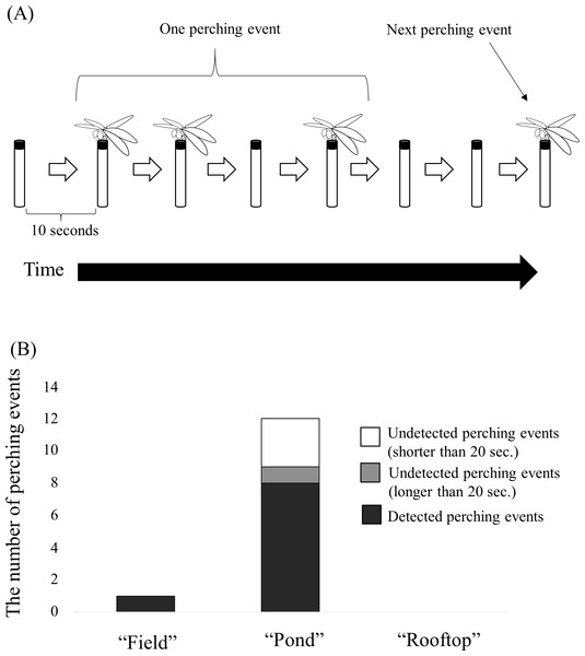 """(A) Schema of a """"perching event"""" extracted from a movie captured by the time-lapse camera for validation. (B) Number of perching events automatically detected by the camera trap at each site."""