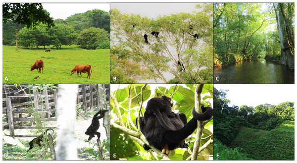 Photos detailing characteristics of the study fragments and their black howler monkey populations.