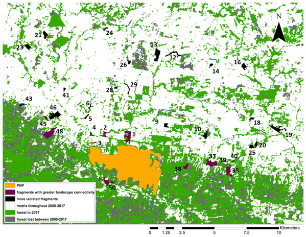 Forest loss and landscape connectivity in the study area.