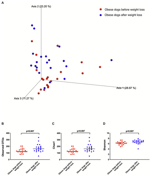 Principal coordinate analysis of beta and alpha diversity of dogs with obesity before and after weight loss.
