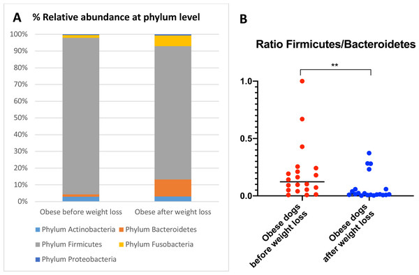 Abundance of fecal bacteria at phylum level found in obese dogs before and after weight loss.